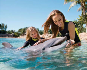 picture of vacation option to swim with the dolphins