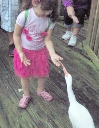 Child feeding a crane on a family trip.