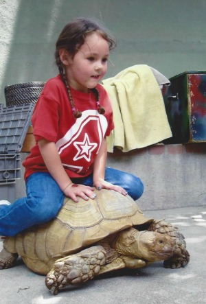 Picture of a child riding a tortoise at a children's interactive exhibit.